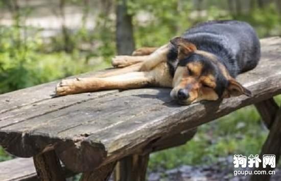 怎样关注狗狗的健康?判断狗狗是否健康的方法
