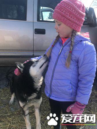 7岁爱狗女孩患脑瘤 10小时4.6万人PO照打气